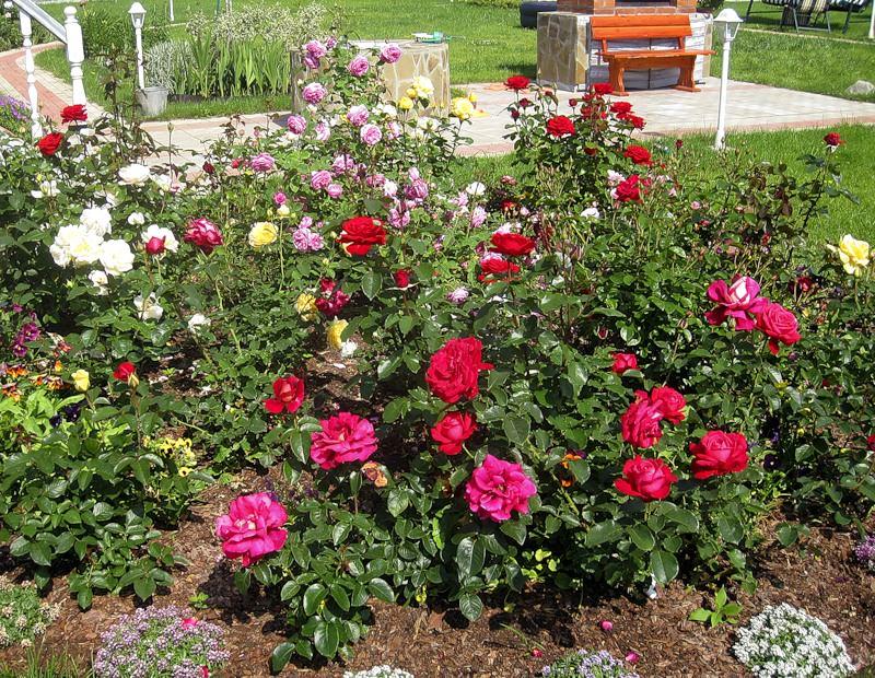 Цветы для розария
