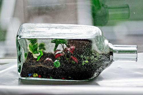 Как выращивать цветы в бутылке?