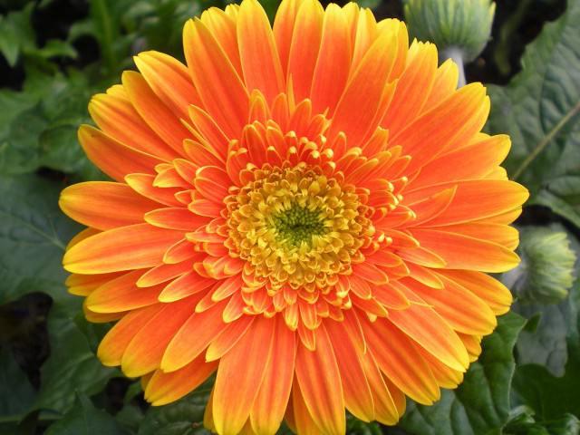 Названия цветов у теней