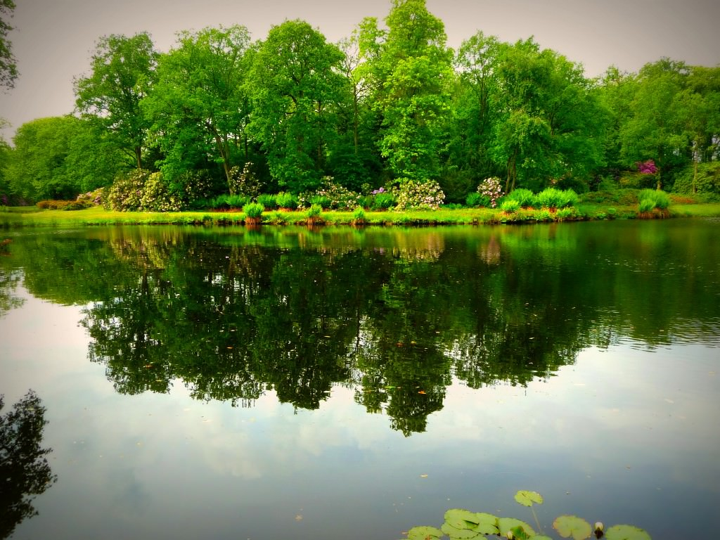 Природный стиль в ландшафтном дизайне фото