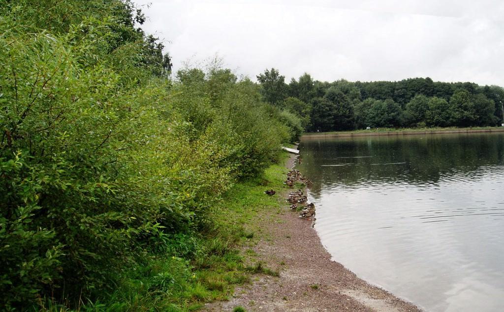 Деревья для укрепления берега Реки
