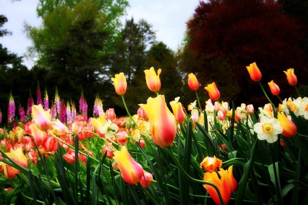 Сорта красивых цветов