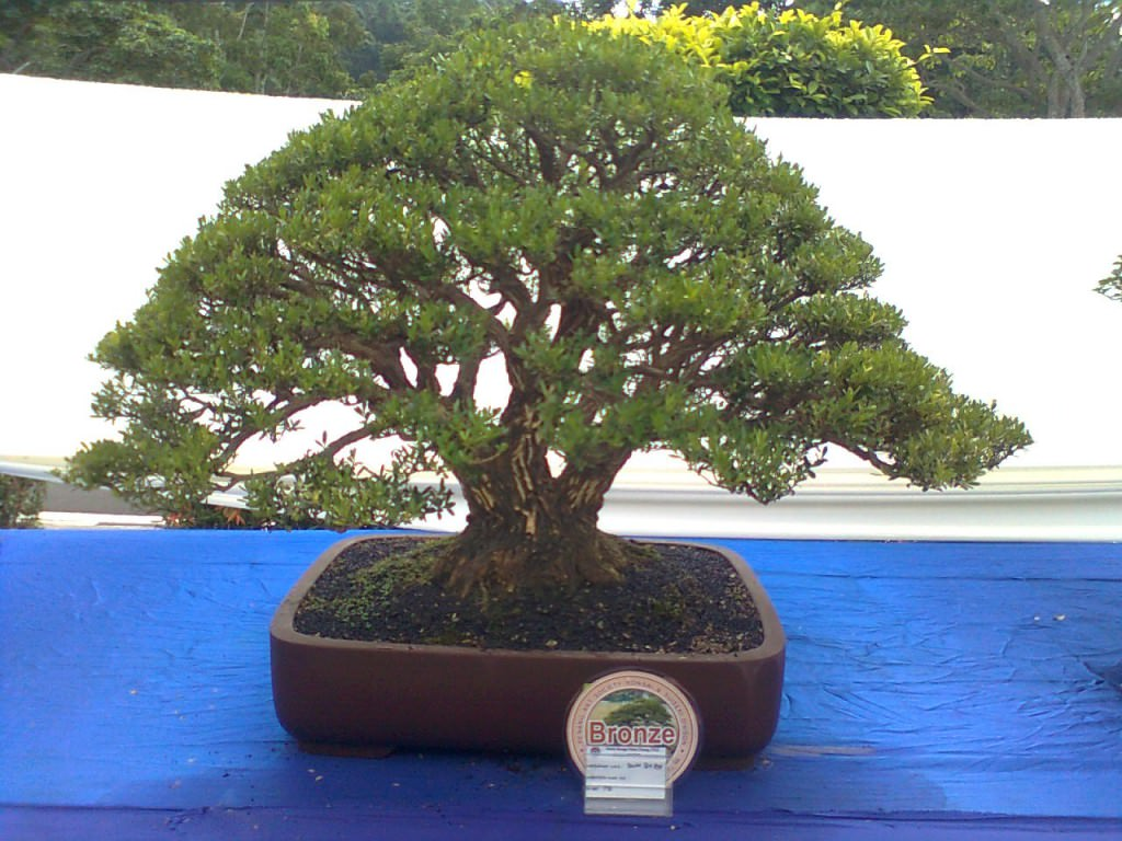 Мастер класс как сделать красивый дерево