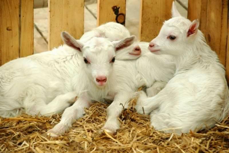 Кормушка для козы своими руками фото