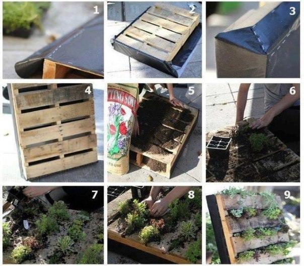Вертикальное озеленение из подручных средств