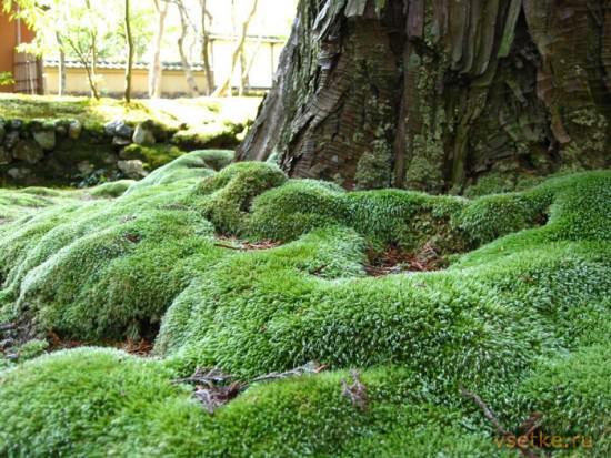 Декоративный мох для сада