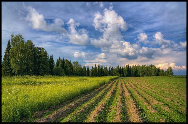 Способы рекультивации земель