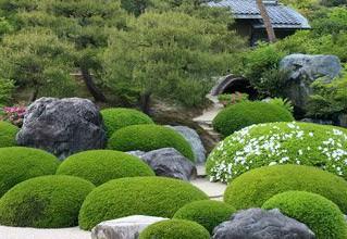 Сад мхов своими руками
