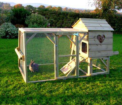 Как построить сарай для кроликов?