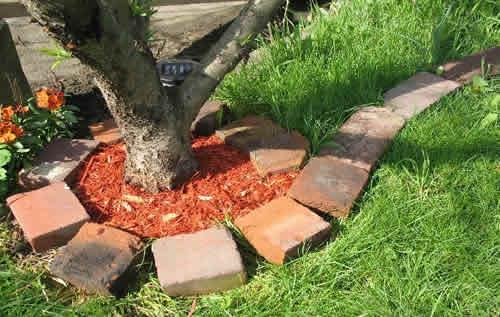 Чем обработать приствольные круги плодовых деревьев