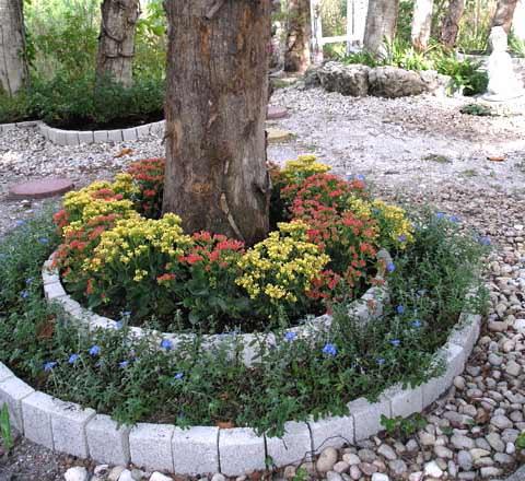 Клумба из хризантем под деревом фото
