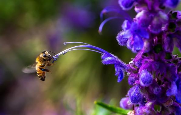 Фото цветов при создании аромата