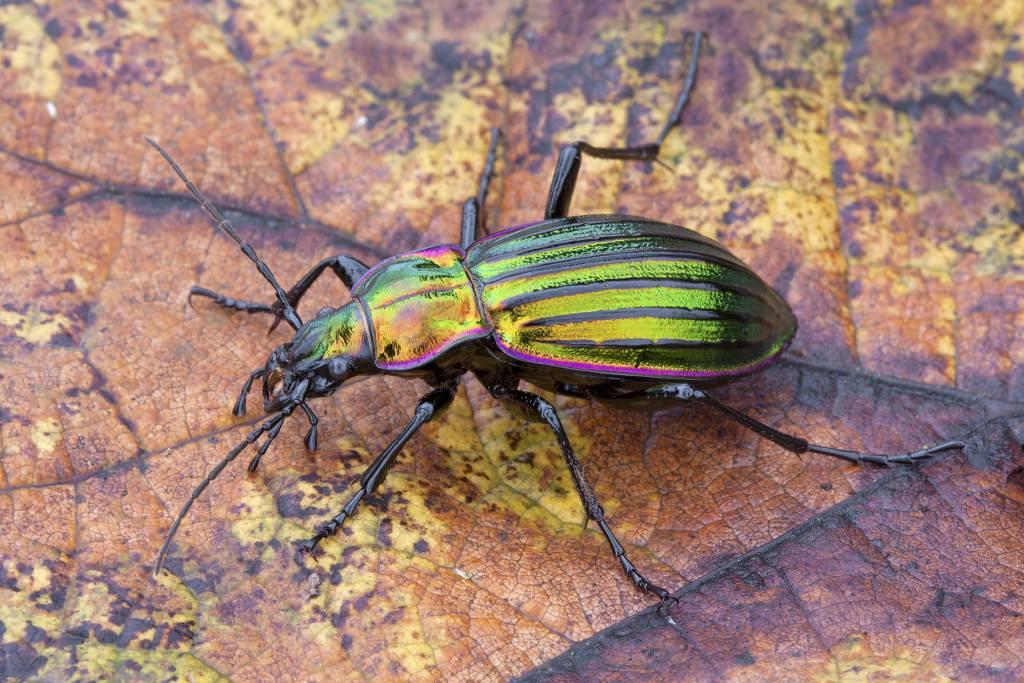 применяете себе разновидности жуков и их названия фото квартиру