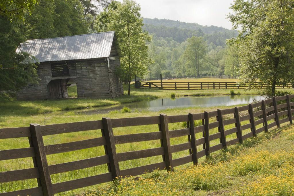 Забор и дерево красивые