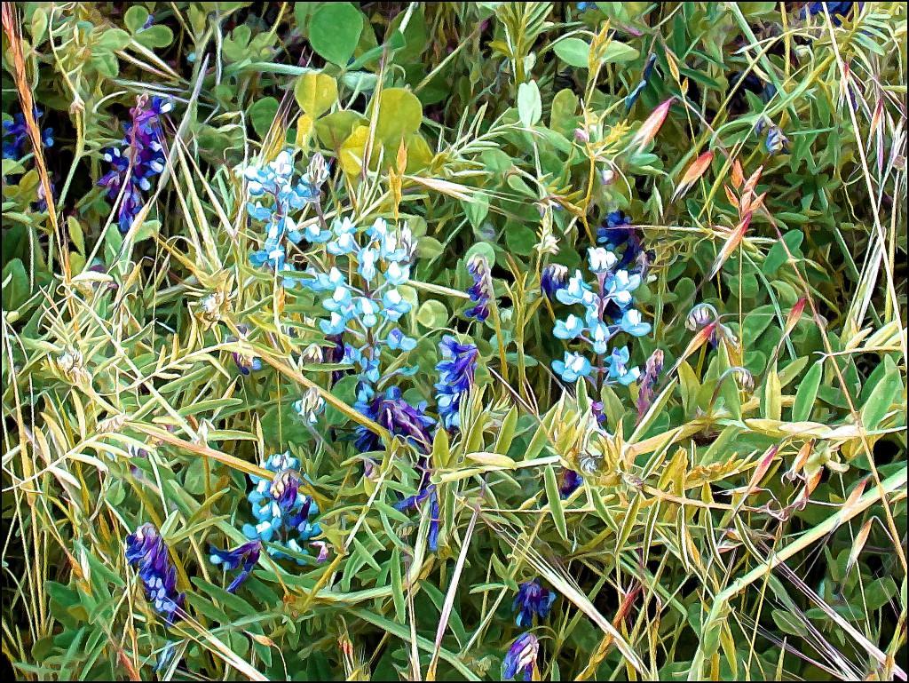 Теория по траве сарняк