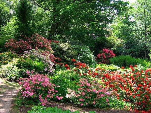 Душистый цветник в саду