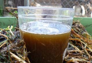 Компостный чай - основа органического земледклия