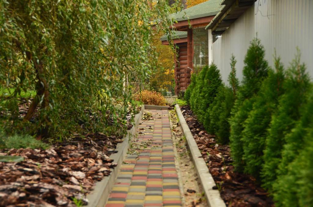 Очень важно грамотно подбирать растения для озеленения участка