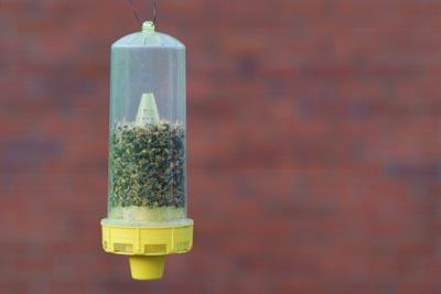 Ловушки позволят изловить пчел