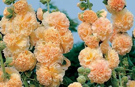 Как правильно посадить розы осенью видео?
