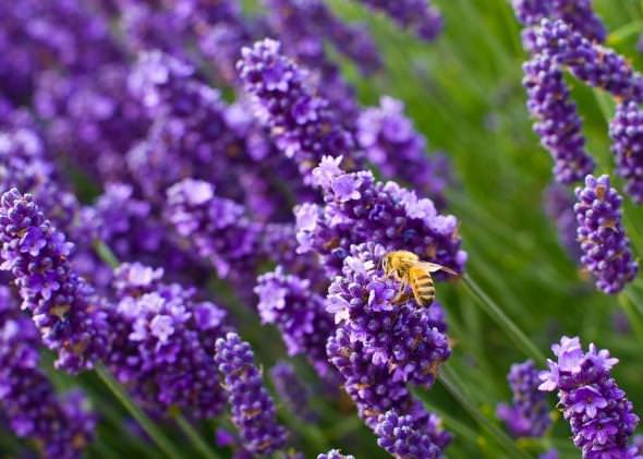Какой цвет отпугивает насекомых?