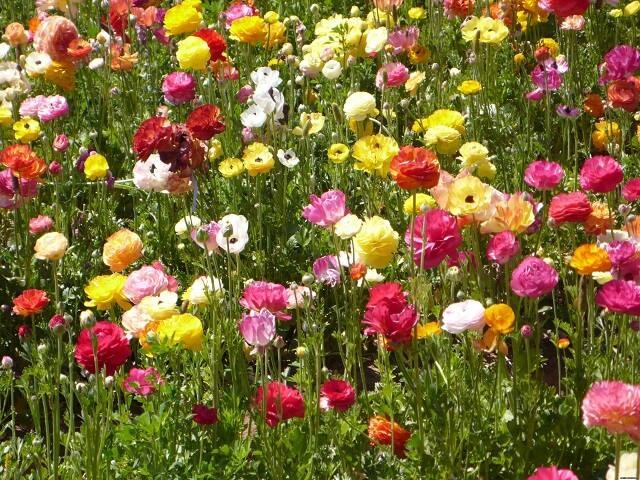 Украшение могил цветами фото