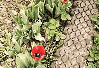 Дорожка садовая из покрышек