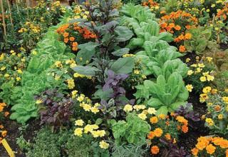 Растения, которые отпугивают насекомых