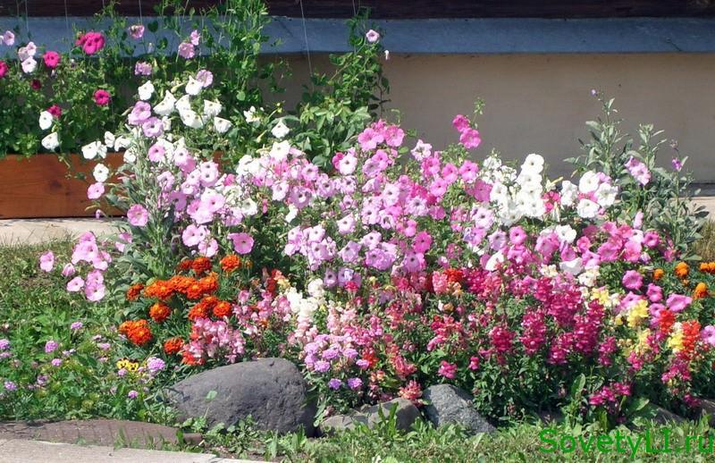 каталог садовых цветов с