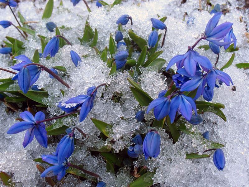 Фото цветов 99