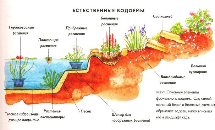 Зеленение воды в пруду