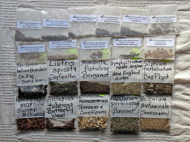 Стратификация семян пртмулы