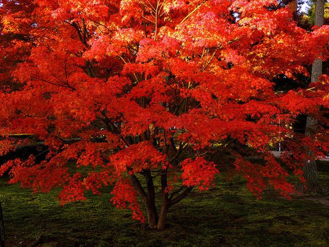 Какие деревья