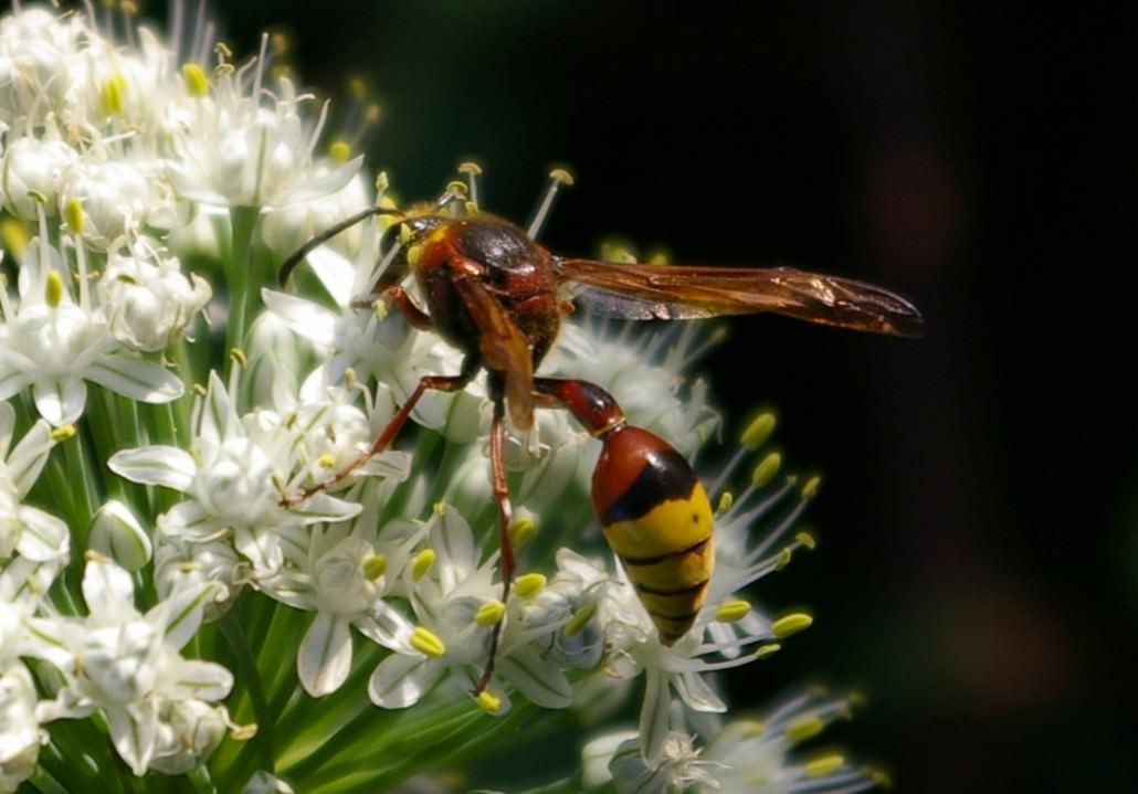 Луковая муха методы борьбы