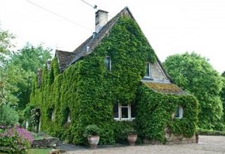 Озеленение фасада дома плющом