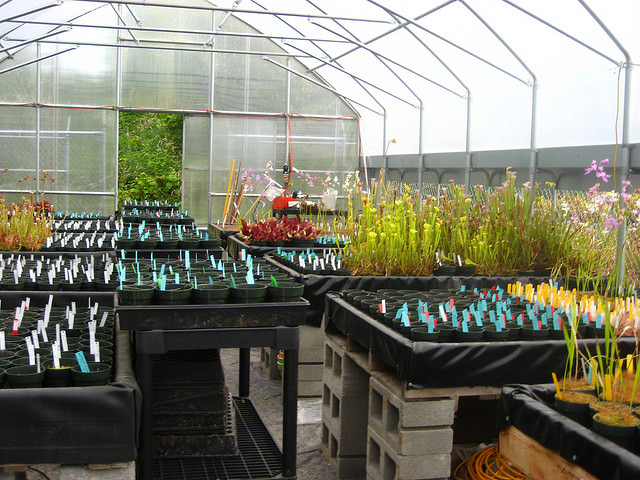 Стратификация семян водосбора в домашних