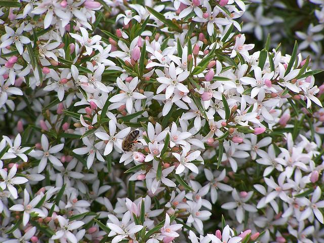Кустовые цветы