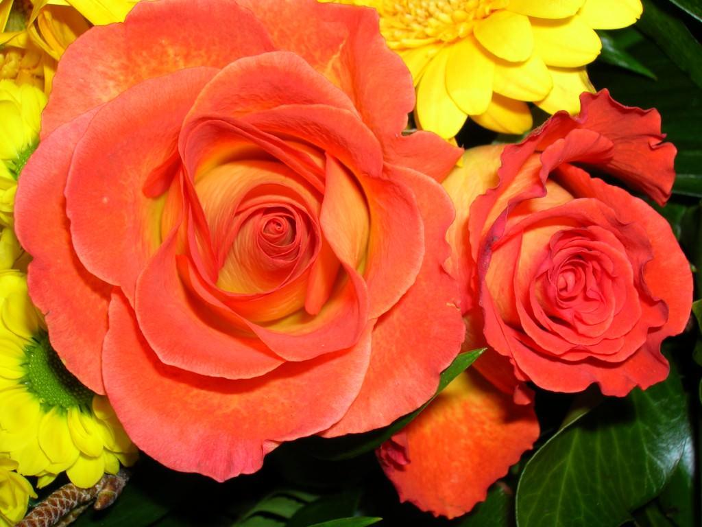 Какие розы