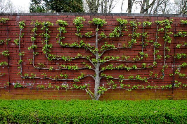 Арбоскульптуры из дерева