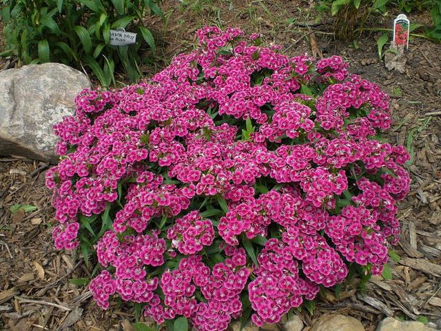 сушеные цветы фото и названия