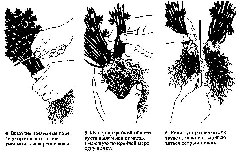 Лен фото растения