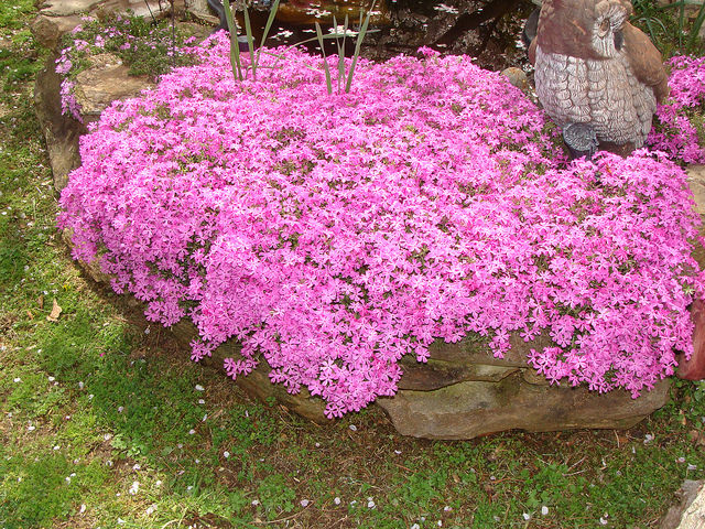 Садовые кустовые цветы фото и названия многолетние