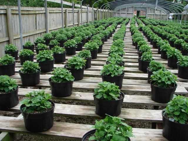 Способы растений