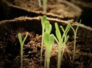 Способы вегетативного размножения растений таблица