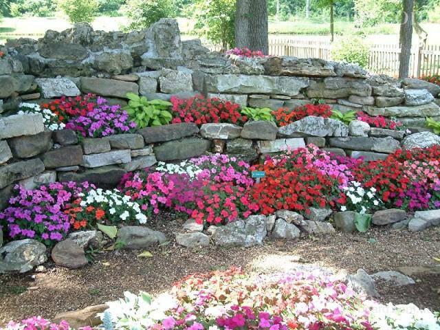 Композиция из растений и камней