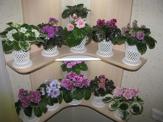 Каталог мелкоцветковые фиалки