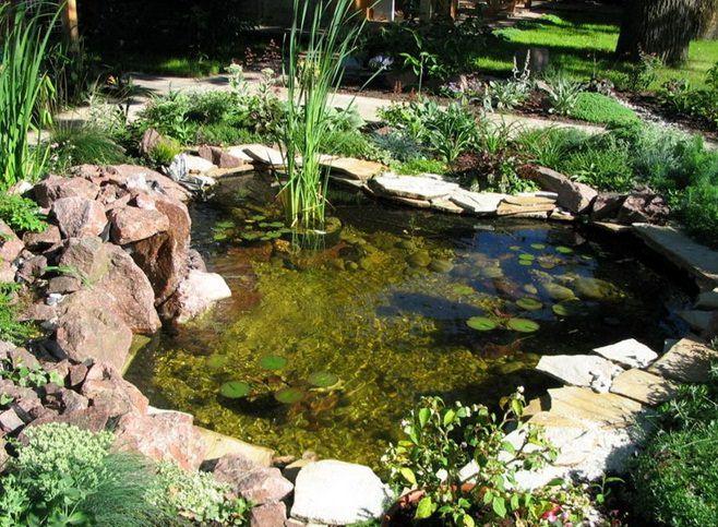 Как украсить водоем на дачном участке  ЯСадовод