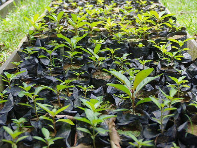 Как садить Виноград с корнями зимой?
