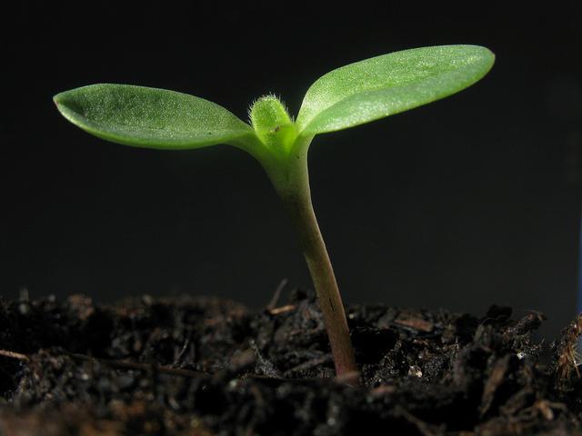 Чем удобрить землю для укоренения саженцев