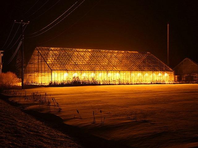 Лампы для освещения теплиц